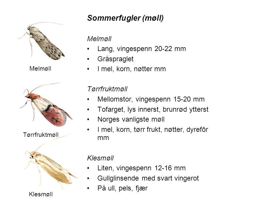 Sommerfugler (møll) Melmøll Lang, vingespenn 20-22 mm Gråspraglet