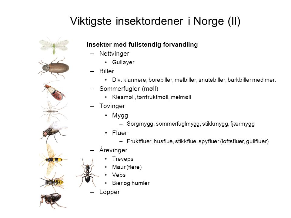 Viktigste insektordener i Norge (II)