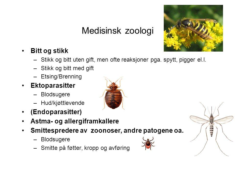 Medisinsk zoologi Bitt og stikk Ektoparasitter (Endoparasitter)