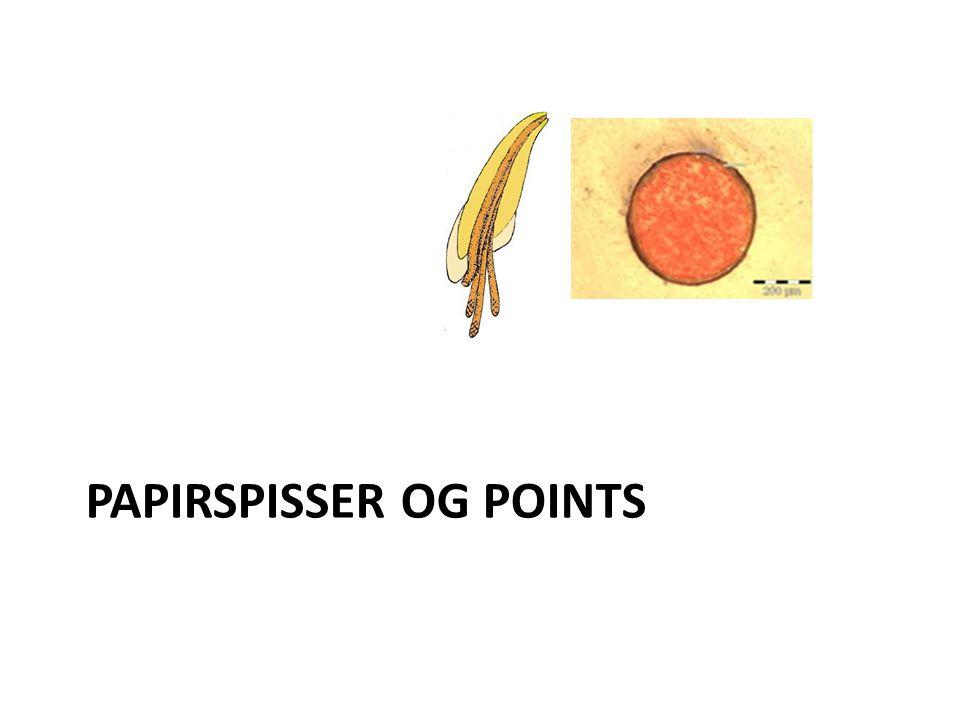 Papirspisser og points