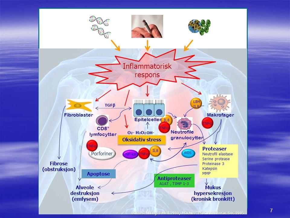 Inflammatorisk respons Makrofager Fibroblaster Epitelceller