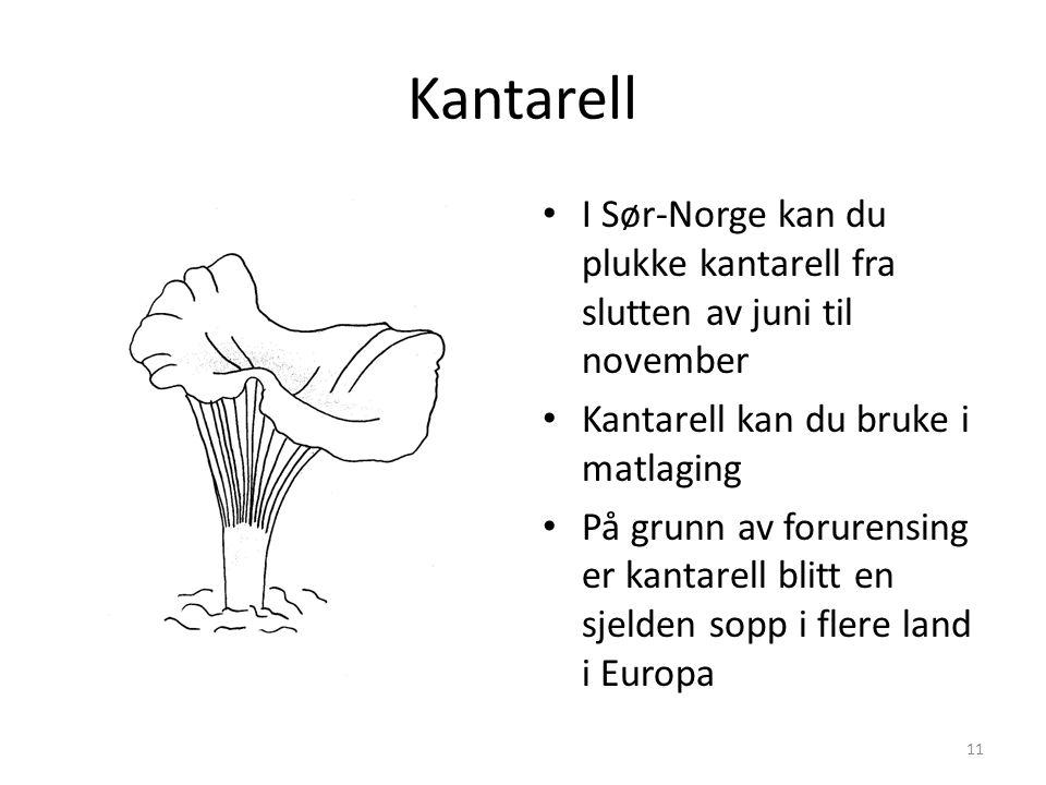 Kantarell I Sør-Norge kan du plukke kantarell fra slutten av juni til november. Kantarell kan du bruke i matlaging.