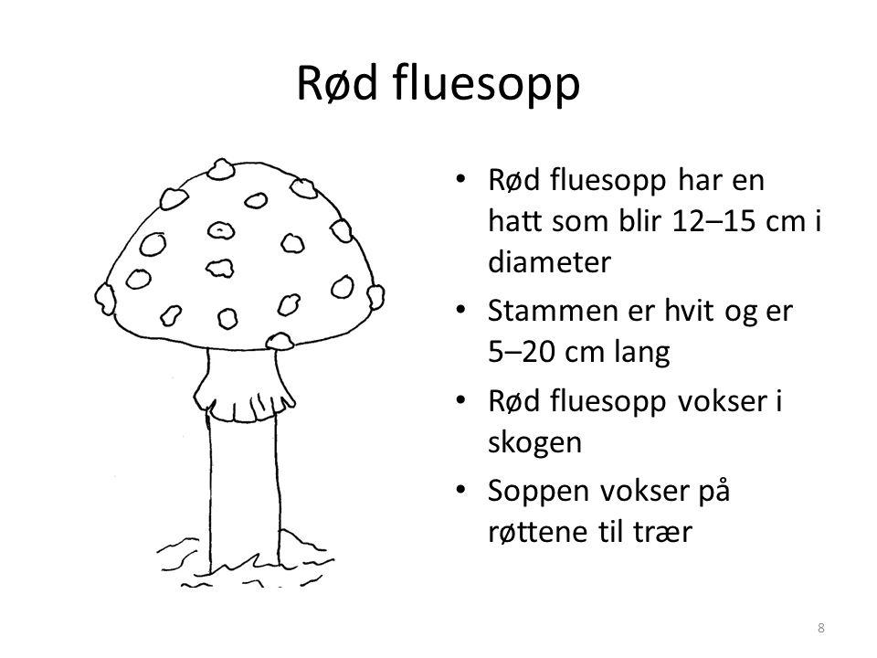 Rød fluesopp Rød fluesopp har en hatt som blir 12–15 cm i diameter