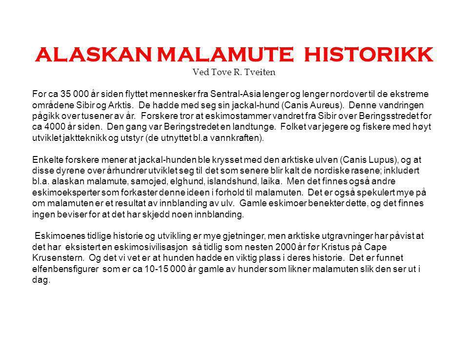 ALASKAN MALAMUTE HISTORIKK