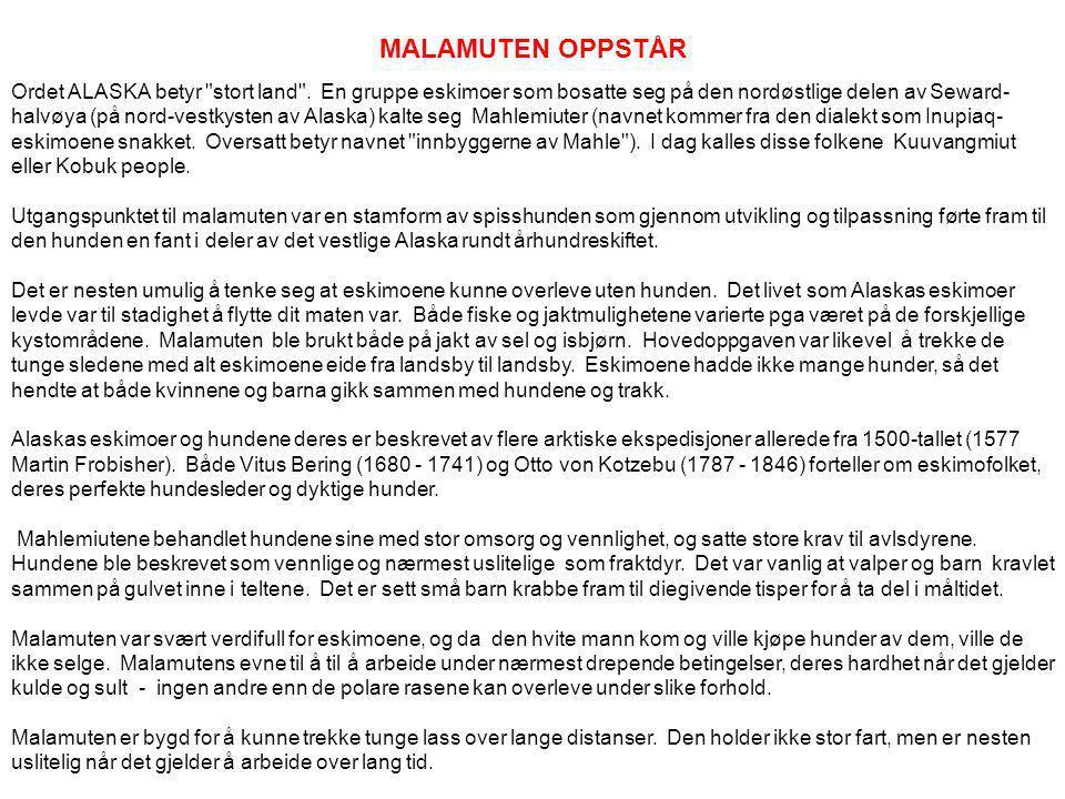 MALAMUTEN OPPSTÅR