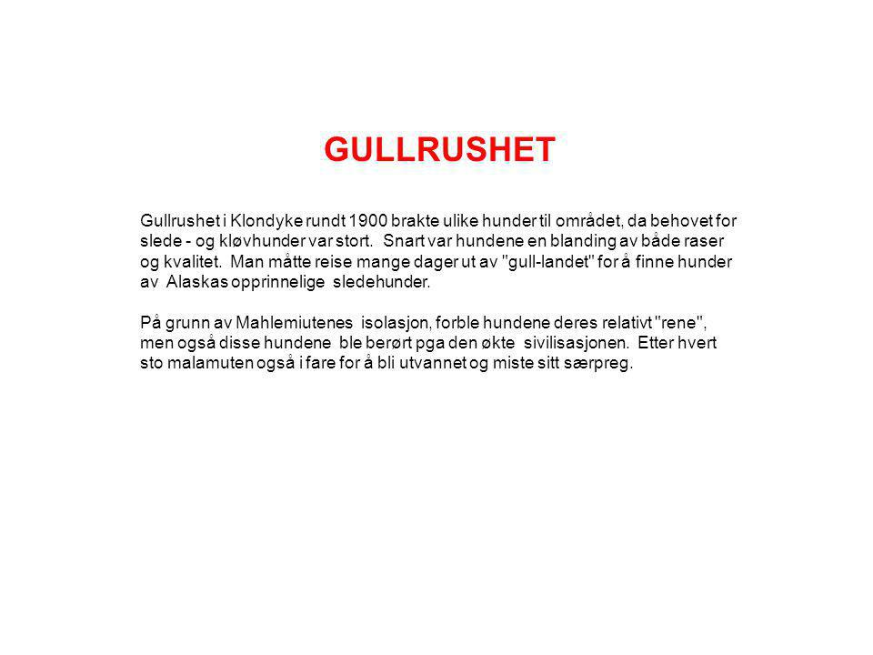 GULLRUSHET
