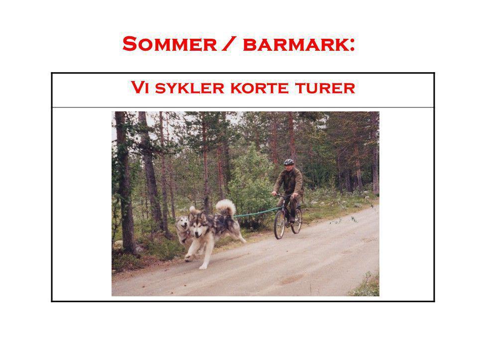 Sommer / barmark: Vi sykler korte turer