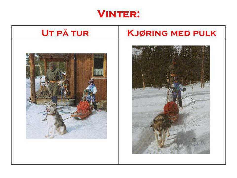 Vinter: Ut på tur Kjøring med pulk