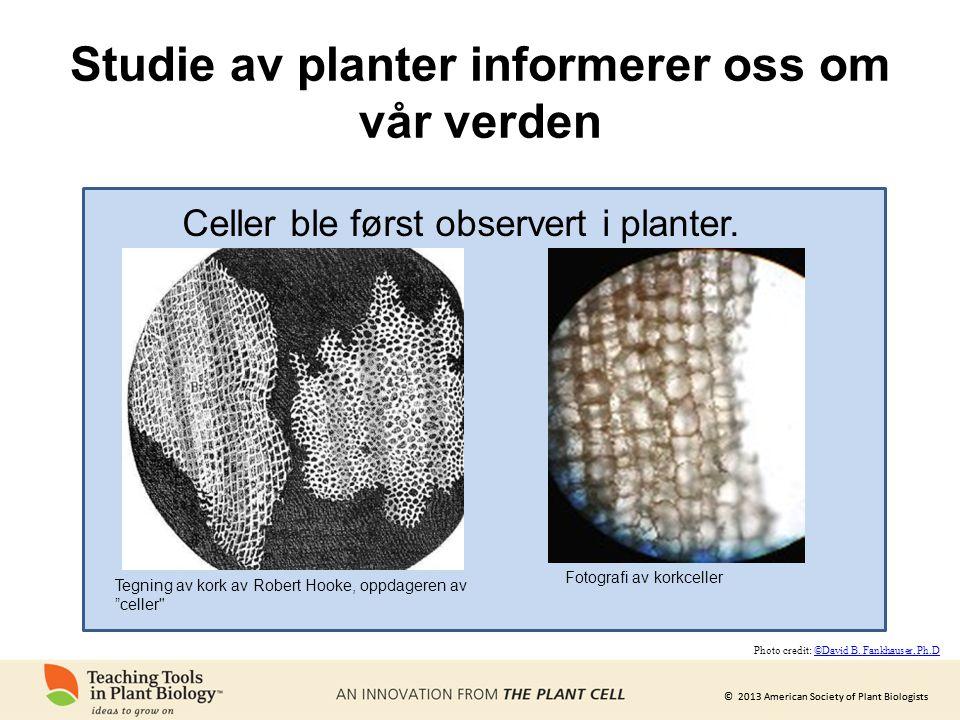 Studie av planter informerer oss om vår verden
