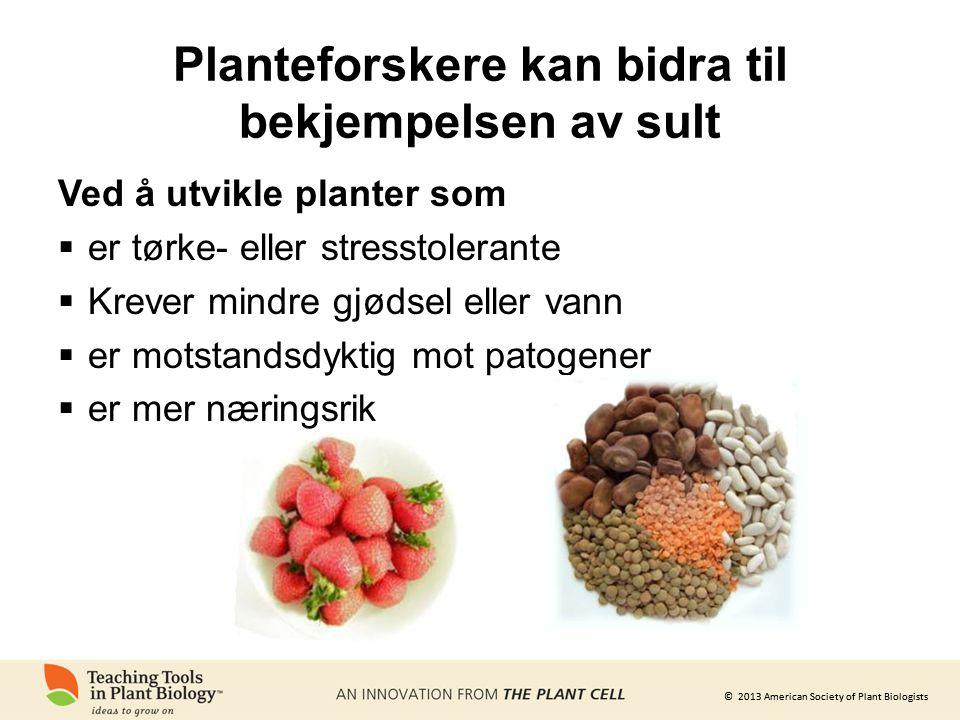 Planteforskere kan bidra til bekjempelsen av sult