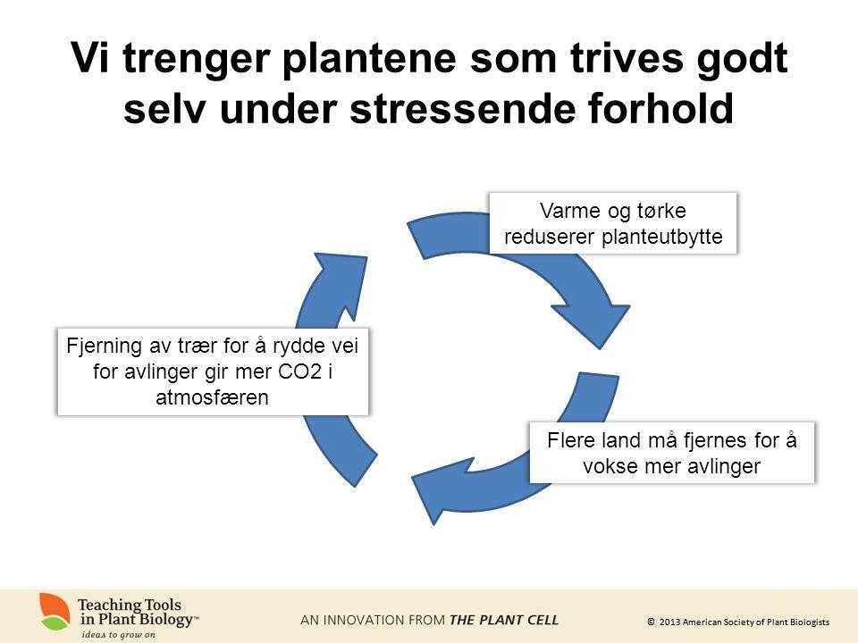 Vi trenger plantene som trives godt selv under stressende forhold