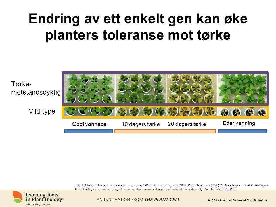 Endring av ett enkelt gen kan øke planters toleranse mot tørke