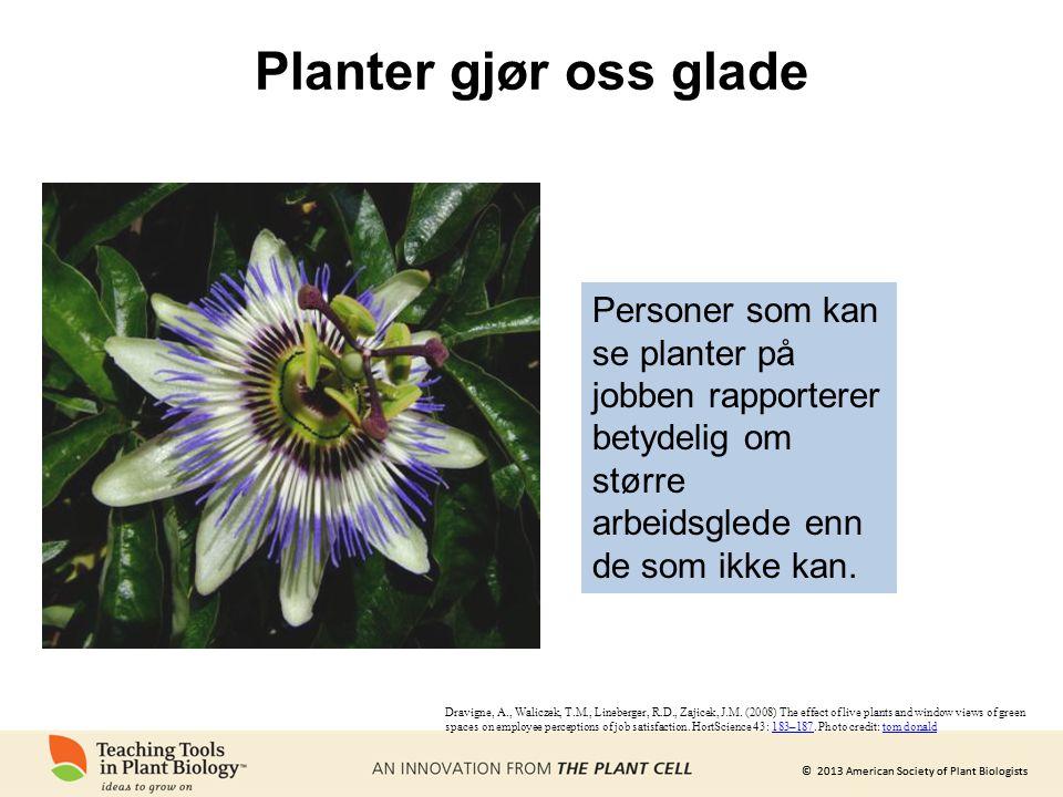 Planter gjør oss glade Personer som kan se planter på jobben rapporterer betydelig om større arbeidsglede enn de som ikke kan.