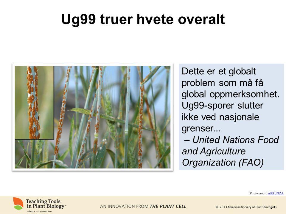 Ug99 truer hvete overalt Dette er et globalt problem som må få global oppmerksomhet. Ug99-sporer slutter ikke ved nasjonale grenser...