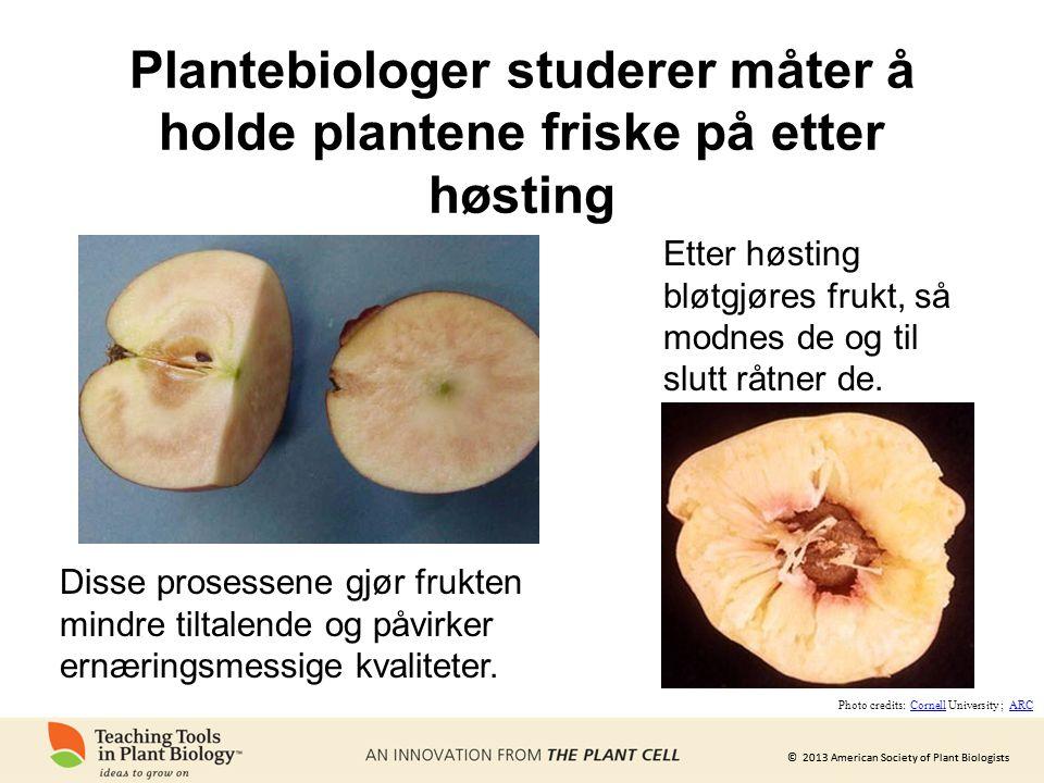 Plantebiologer studerer måter å holde plantene friske på etter høsting
