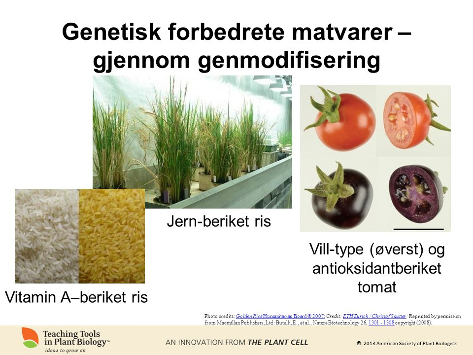 Genetisk forbedrete matvarer – gjennom genmodifisering
