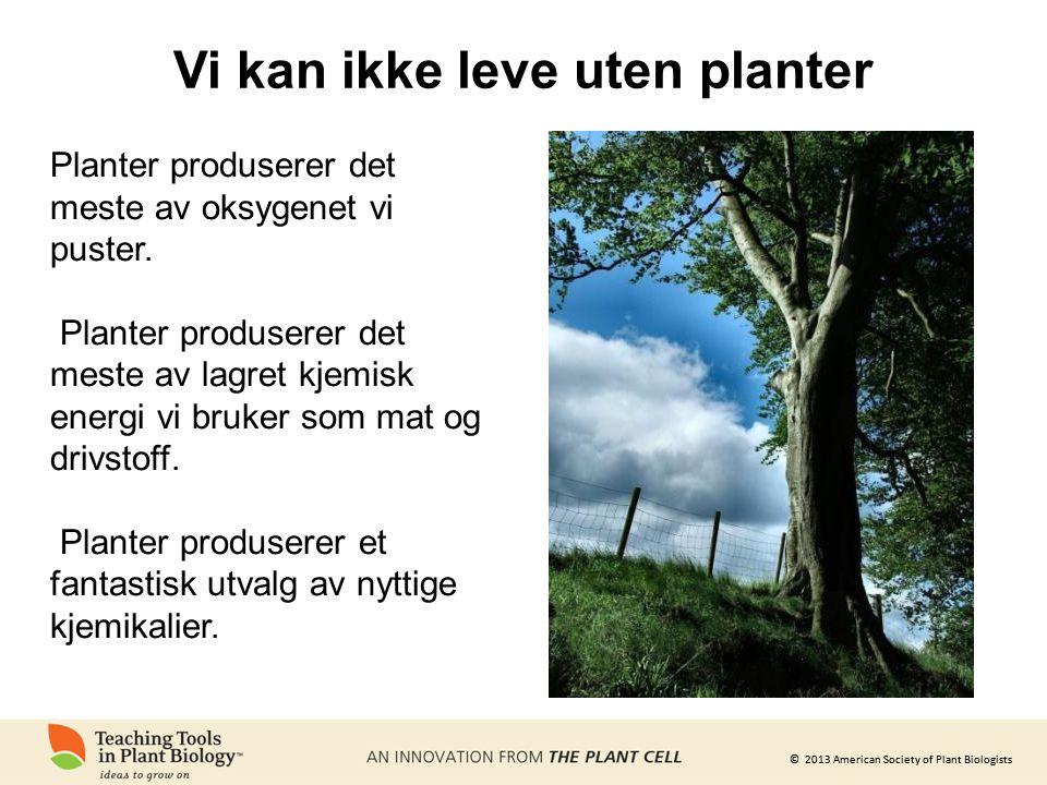 Vi kan ikke leve uten planter