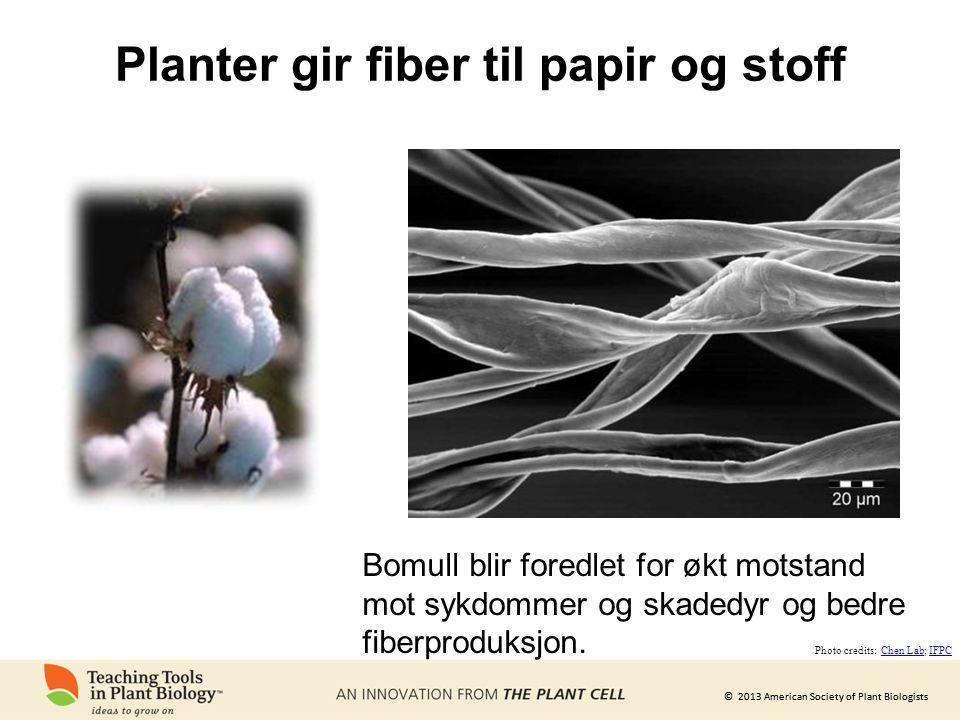 Planter gir fiber til papir og stoff