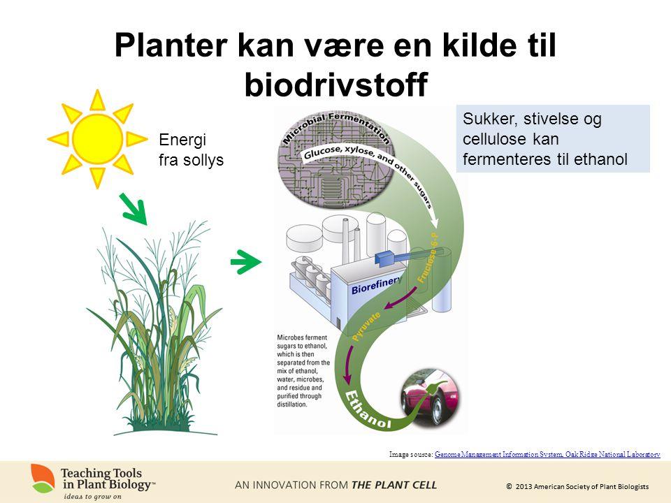 Planter kan være en kilde til biodrivstoff