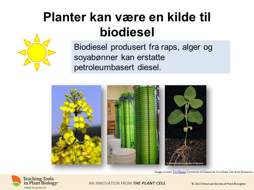 Planter kan være en kilde til biodiesel