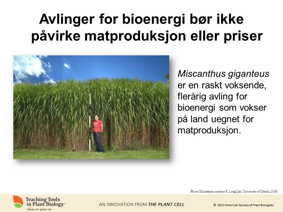 Avlinger for bioenergi bør ikke påvirke matproduksjon eller priser