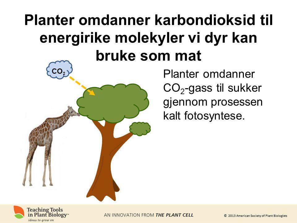 Planter omdanner karbondioksid til energirike molekyler vi dyr kan bruke som mat
