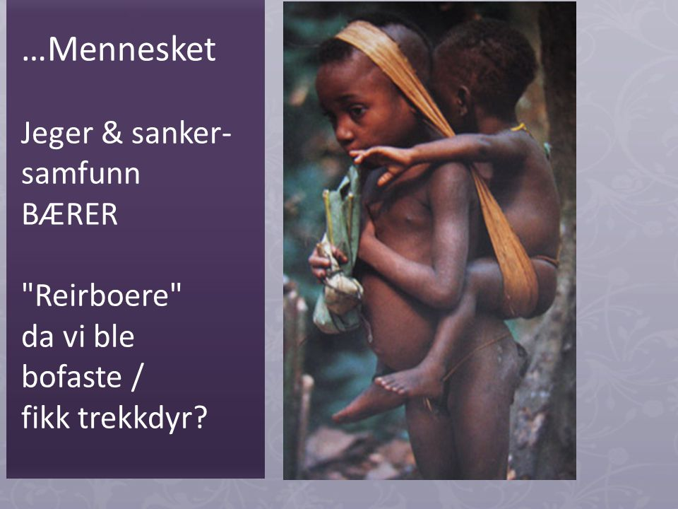…Mennesket Jeger & sanker- samfunn BÆRER Reirboere da vi ble