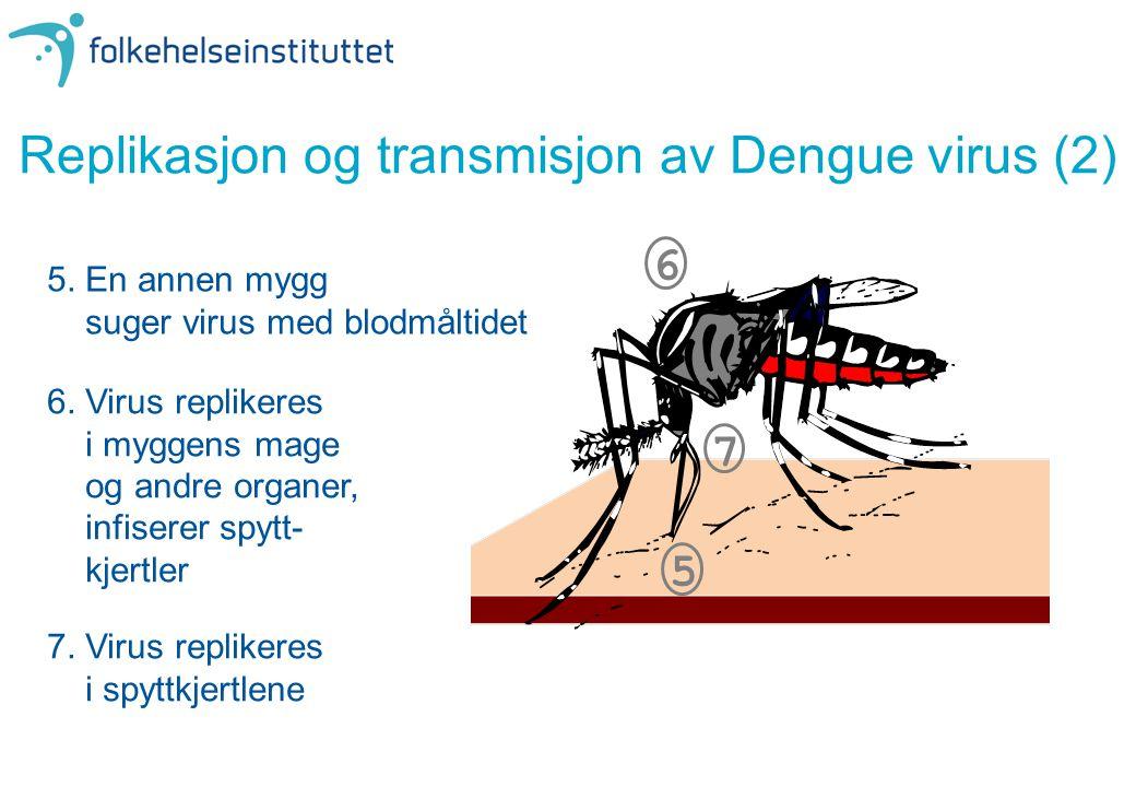 Replikasjon og transmisjon av Dengue virus (2)