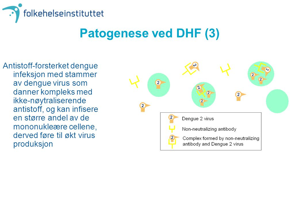 Patogenese ved DHF (3)