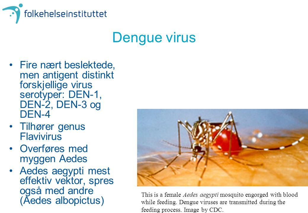 Dengue virus Fire nært beslektede, men antigent distinkt forskjellige virus serotyper: DEN-1, DEN-2, DEN-3 og DEN-4.