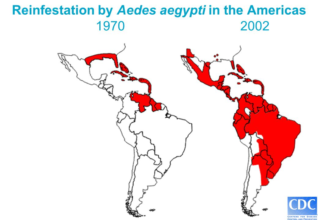 Reinfestation by Aedes aegypti in the Americas 1970 2002