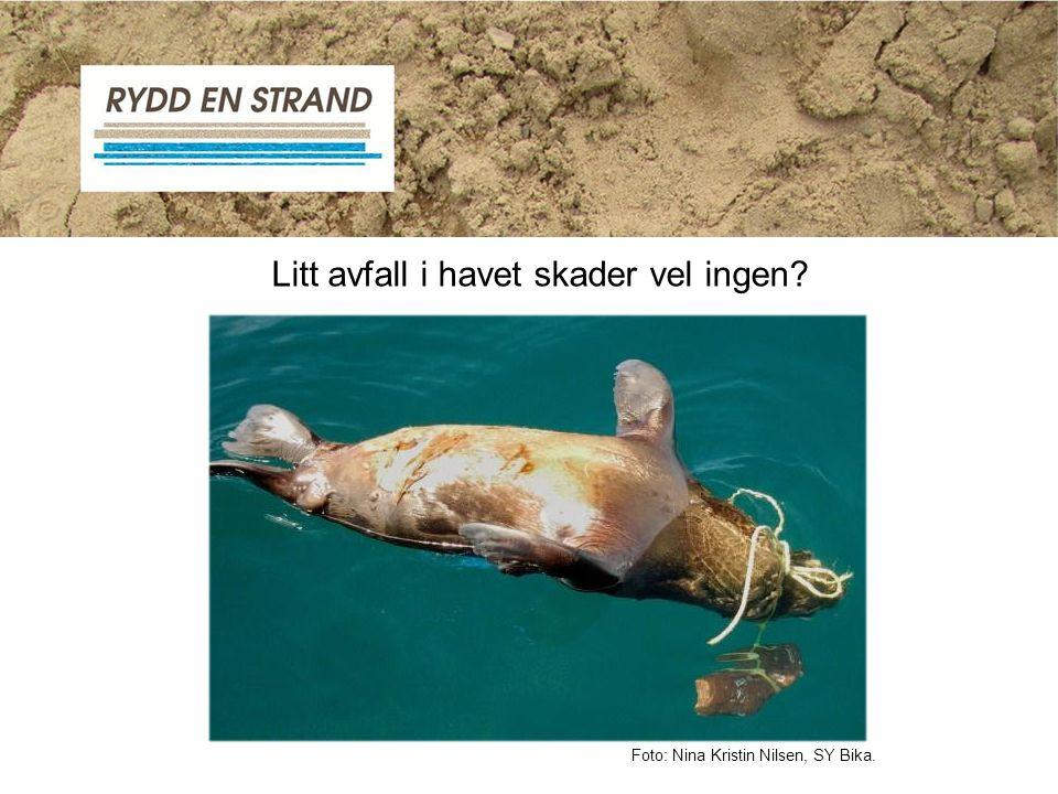 Litt avfall i havet skader vel ingen