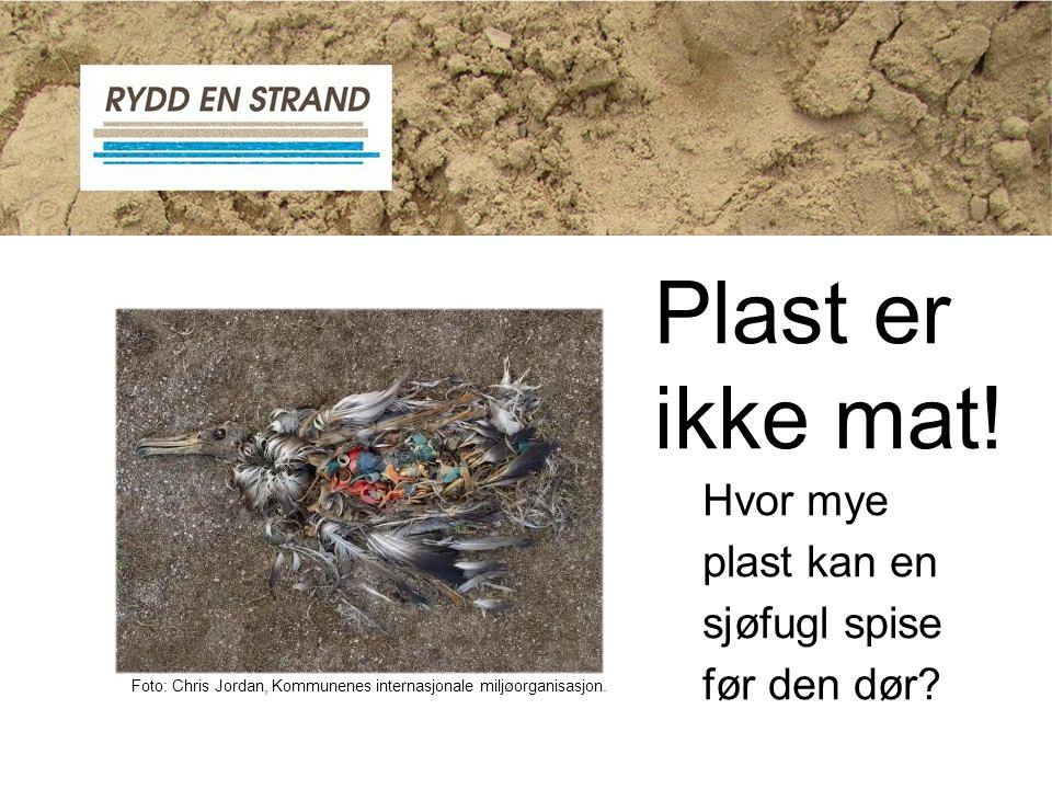 Plast er ikke mat! Hvor mye plast kan en sjøfugl spise før den dør
