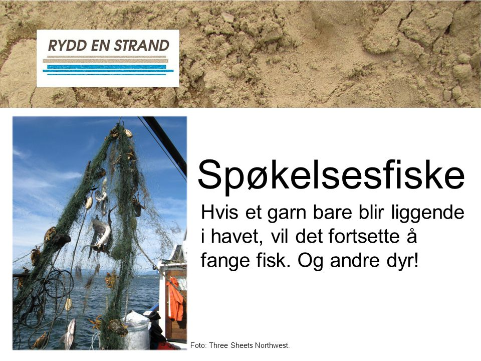 Spøkelsesfiske Hvis et garn bare blir liggende i havet, vil det fortsette å fange fisk. Og andre dyr!