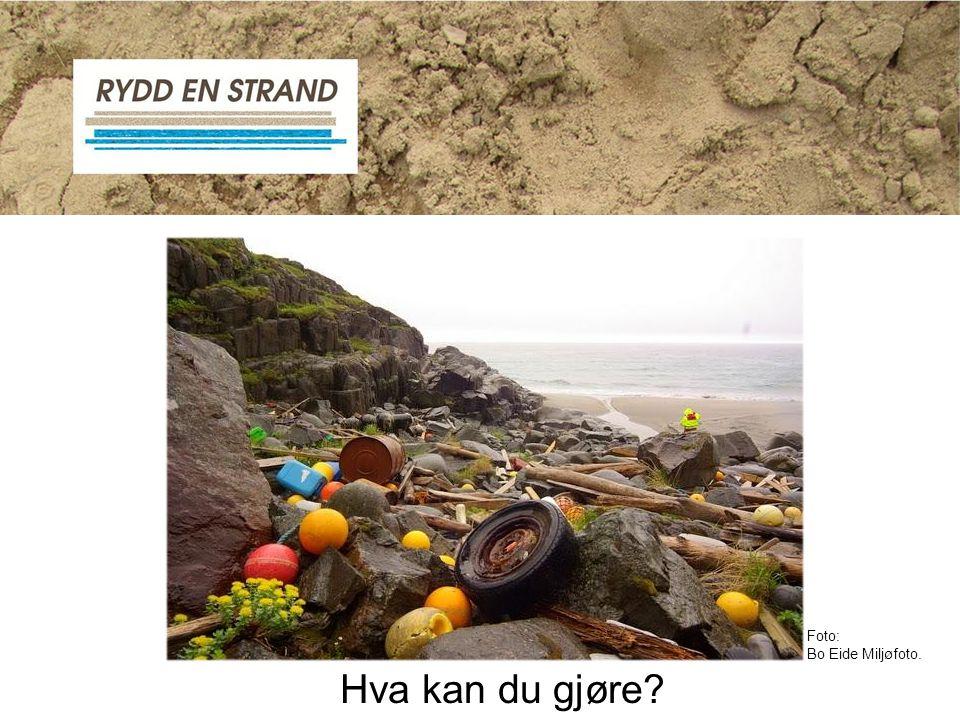 Foto: Bo Eide Miljøfoto. Hva kan du gjøre