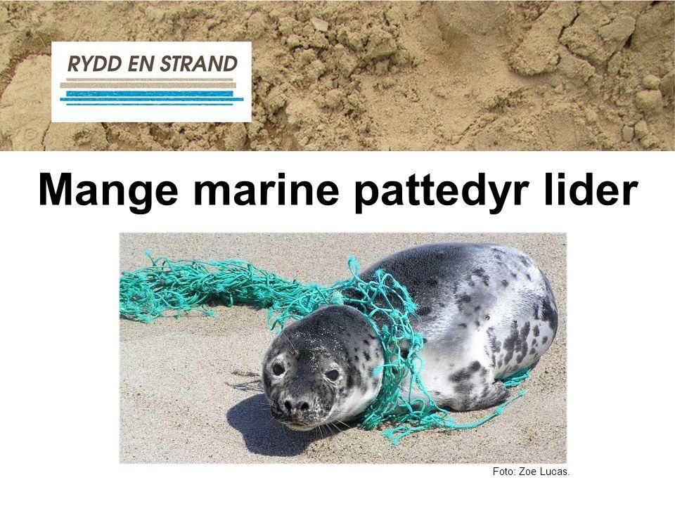 Mange marine pattedyr lider
