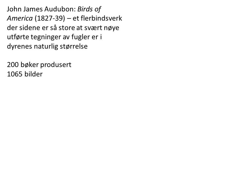 John James Audubon: Birds of America (1827-39) – et flerbindsverk der sidene er så store at svært nøye utførte tegninger av fugler er i dyrenes naturlig størrelse