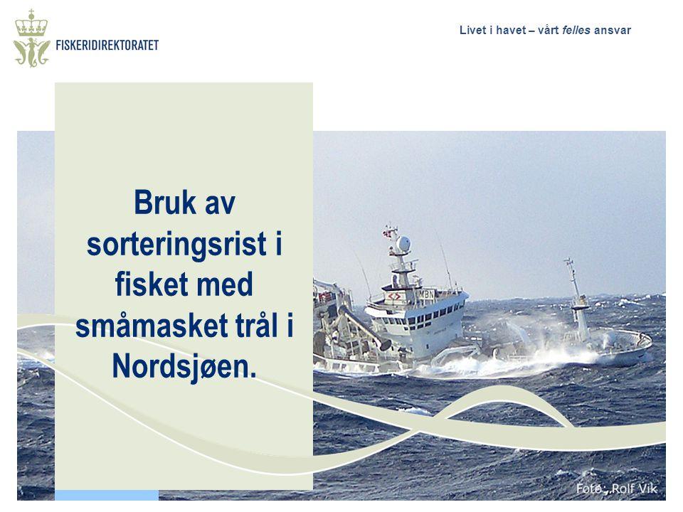 Bruk av sorteringsrist i fisket med småmasket trål i Nordsjøen.