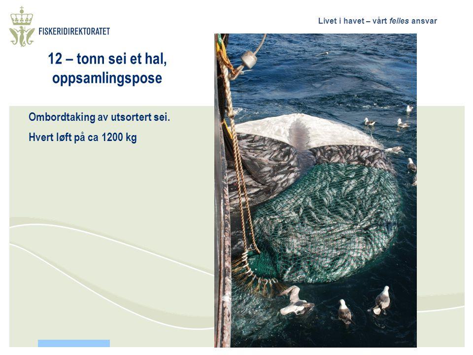 12 – tonn sei et hal, oppsamlingspose