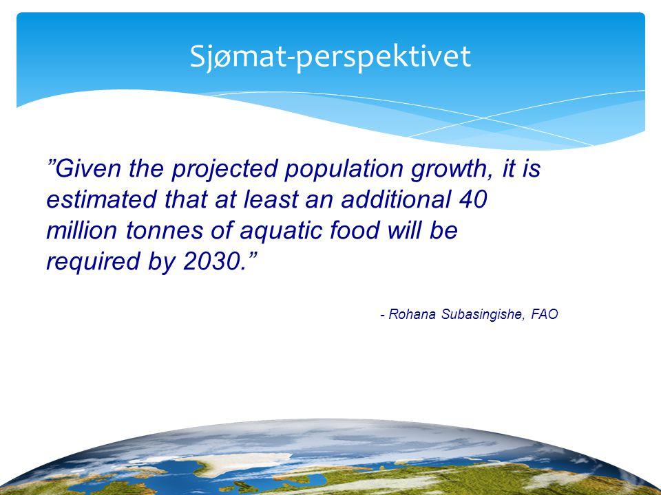 Sjømat-perspektivet