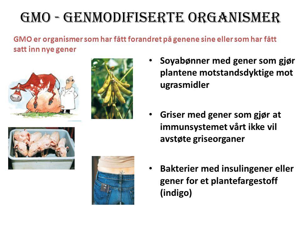 GMO - genmodifiserte organismer