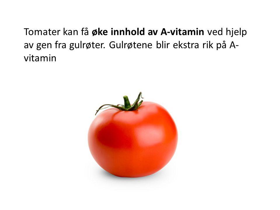 Tomater kan få øke innhold av A-vitamin ved hjelp av gen fra gulrøter