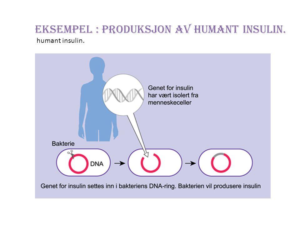 Eksempel : Produksjon av humant insulin.
