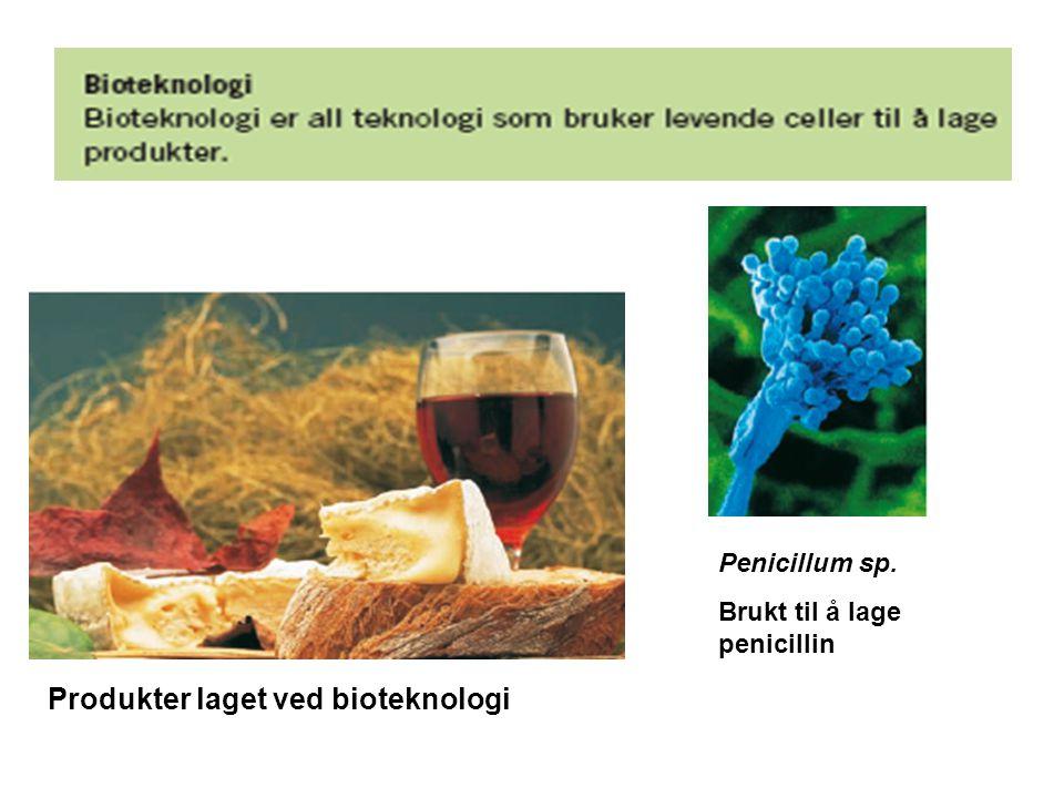 Produkter laget ved bioteknologi