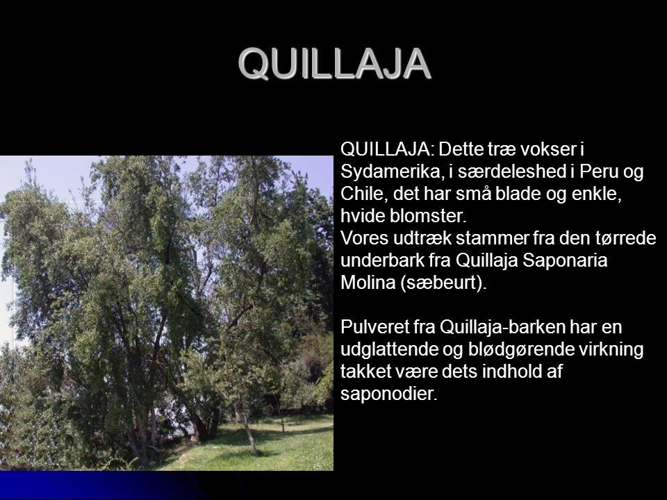 QUILLAJA QUILLAJA: Dette træ vokser i Sydamerika, i særdeleshed i Peru og Chile, det har små blade og enkle, hvide blomster.