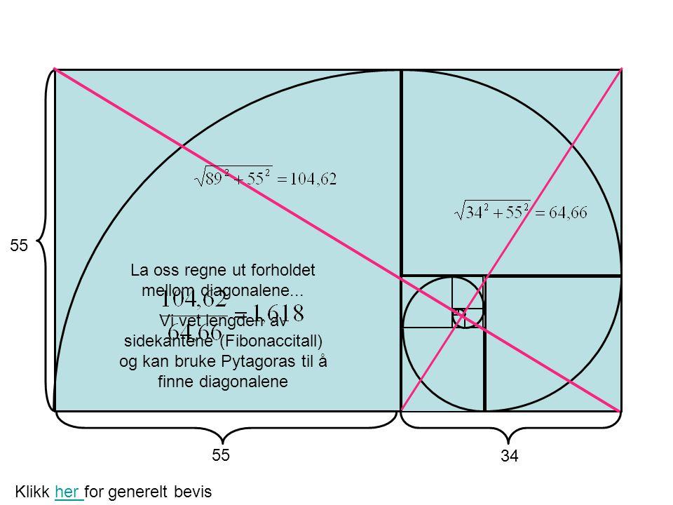 La oss regne ut forholdet mellom diagonalene...