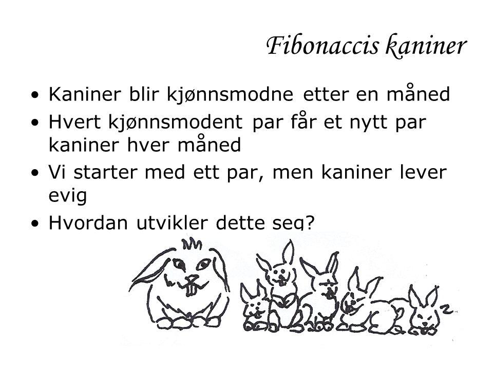 Fibonaccis kaniner Kaniner blir kjønnsmodne etter en måned