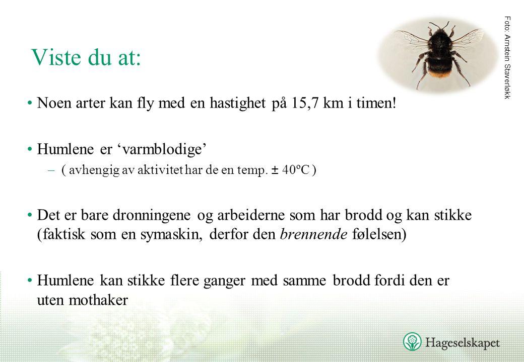 Viste du at: Noen arter kan fly med en hastighet på 15,7 km i timen!