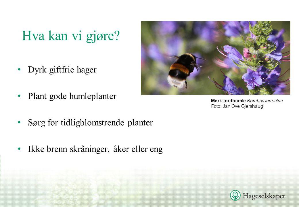 Hva kan vi gjøre Dyrk giftfrie hager Plant gode humleplanter