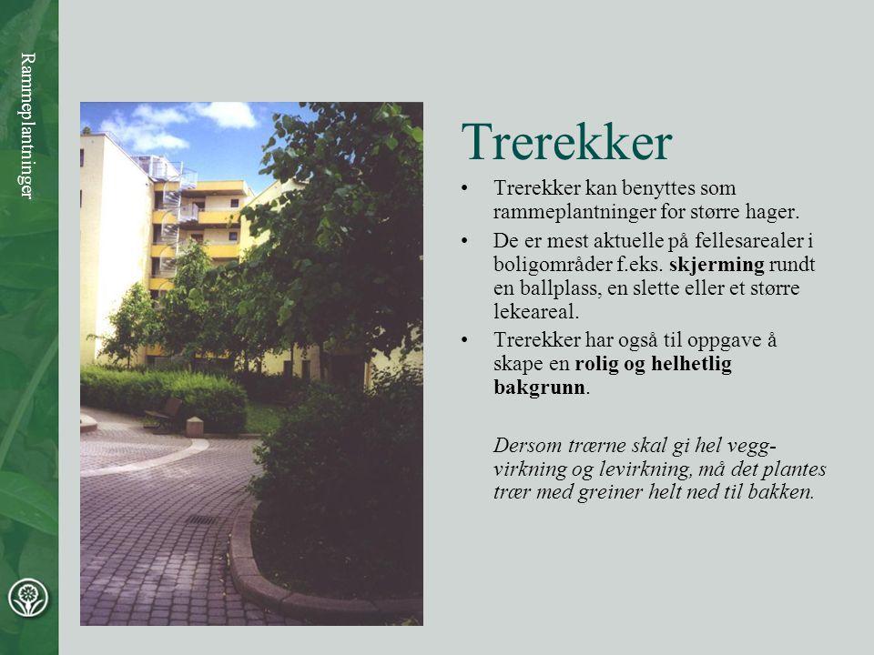 Trerekker Trerekker kan benyttes som rammeplantninger for større hager.